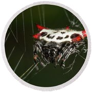 Spiny Orb Weaver Round Beach Towel