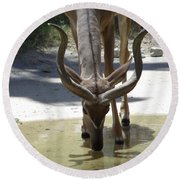 Spiral Horned Antelope Drinking Round Beach Towel