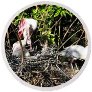 Spoonbill Family Round Beach Towel