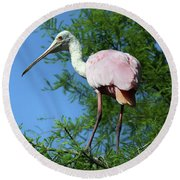 Spoonbill In A Tree Round Beach Towel