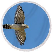 Spot-winged Falconet  In Flight Round Beach Towel