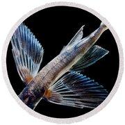 Spotfin Flyingfish Round Beach Towel