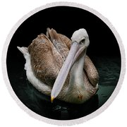 Spotlight On A Pink-backed Pelican Round Beach Towel