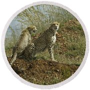 Spotted Cats Round Beach Towel