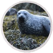 Spotted Coat Of A Harbor Seal Round Beach Towel