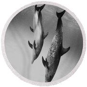 Spotted Dolphins - Bw Round Beach Towel