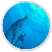 Spotted Dolphins Round Beach Towel