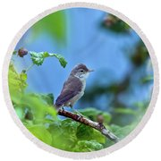 Spotted Flycatcher Muscicapa Striata .  Round Beach Towel