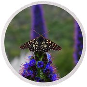 Spotted Moth On Purple Flowers Round Beach Towel