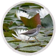 Spotted Sandpiper And Lilies Round Beach Towel
