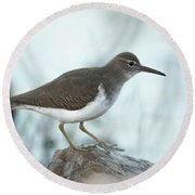 Spotted Sandpiper Round Beach Towel