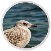 Spotted Seagull Round Beach Towel