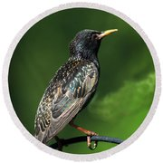 Spotted Starling Round Beach Towel