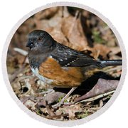 Spotted Towhee Round Beach Towel