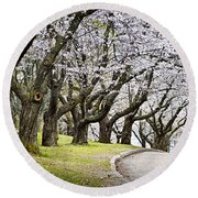 Spring Apple Orchard Round Beach Towel by Elena Elisseeva