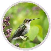 Spring Beauty Hummingbird Square Round Beach Towel