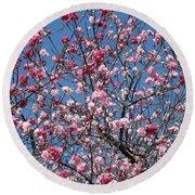 Spring Blossoms Against Blue Sky Round Beach Towel