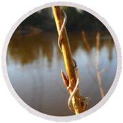 Spring Bud On Balm Of Gilead Stem Round Beach Towel