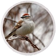 Spring Chipping Sparrow Round Beach Towel