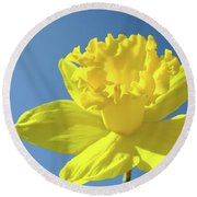 Spring Daffodil Flowers Art Prints Blue Sky Baslee Troutman Round Beach Towel