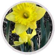 Spring Daffodil Round Beach Towel