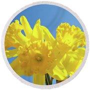 Spring Daffodils Flowers Garden Blue Sky Baslee Troutman Round Beach Towel