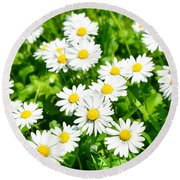 Spring Daisy In The Meadow Round Beach Towel