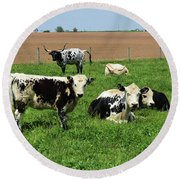 Spring Day With Cows On An Amish Cattle Farm Round Beach Towel