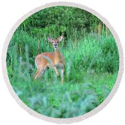 Spring Deer Round Beach Towel