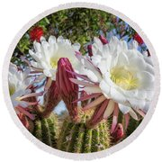 Spring Easter Cactus Blooms 789 Round Beach Towel