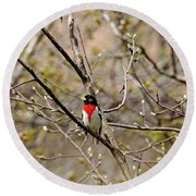 Spring Grosbeak Round Beach Towel