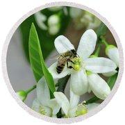 Spring Honey Bee Pollinates Orange Citrus Flower Round Beach Towel