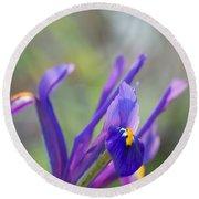 Spring Iris Three Round Beach Towel