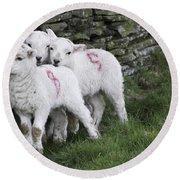 Spring Lambs 2 Round Beach Towel