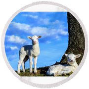 Spring Lambs Evening Light Round Beach Towel