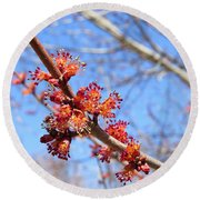 Spring Maple Blossoms Round Beach Towel