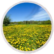 Spring Meadow Full Of Dandelions Flowers And Green Grass Round Beach Towel