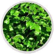 Spring New Beech Leaves Round Beach Towel