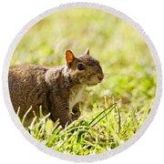 Spring Squirrel Round Beach Towel