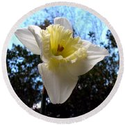 Spring's First Daffodil 2 Round Beach Towel
