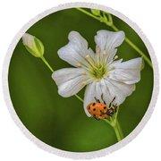 Springtime Ladybug Round Beach Towel