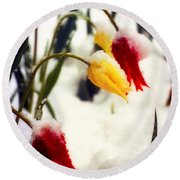 Springtime Tulips In The Snow Poster Print Round Beach Towel