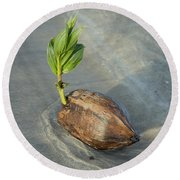 Sprouting Coconut Round Beach Towel