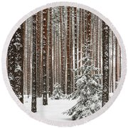 Spruce Among The Pines Round Beach Towel