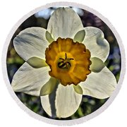 Square Daffydowndilly Round Beach Towel