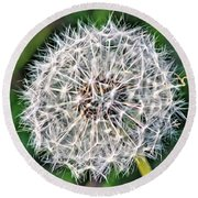 Square Dandelion 2 Round Beach Towel