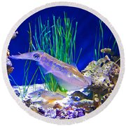 Squid In Monterey Aquarium-california Round Beach Towel