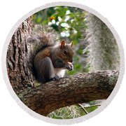 Squirrel 7 Round Beach Towel