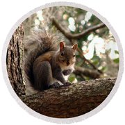 Squirrel 8 Round Beach Towel