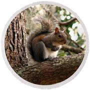 Squirrel 9 Round Beach Towel